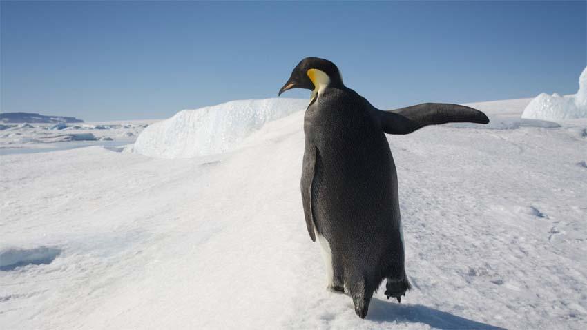 penguintalk